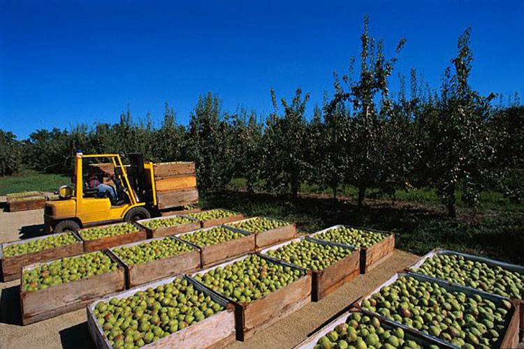 David Del Curto Fruit Distributors relies on MarkMagic barcode labeling software.
